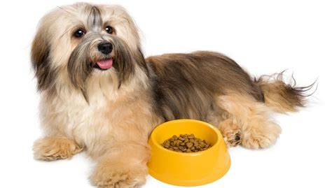 havanese food best food for havanese 7 vet recommended brands