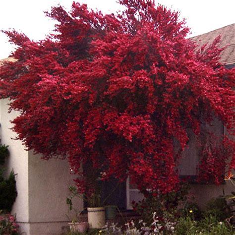 Beautiful Home Gardens plant superstars landscape design the avant gardener