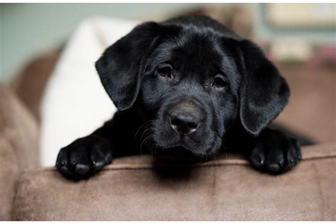 Introducing My New Puppy by Introducing My New Photo Studio Puppy Quot Tippet Quot Greener
