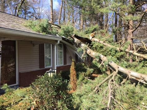 S Tree Fell On House by High Winds Turn Deadly For Horses Damage Homes Wnyt