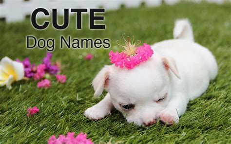 dogs name in up names great ideas for naming your puppy the happy puppy site