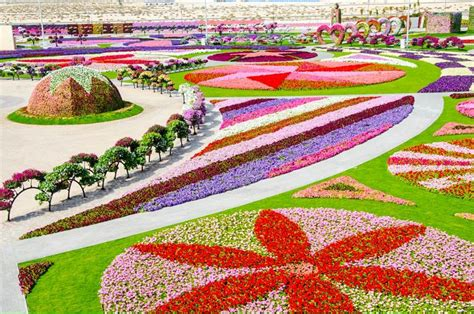 Dubai Miracle Garden World Biggest Flower Garden Best Flower Gardens In The World