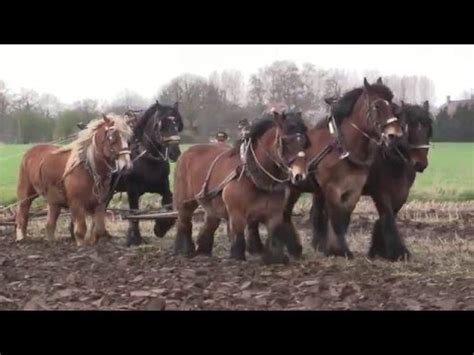 amish plowing with a seven hitch amish farming with antique plow and belgian horses doovi