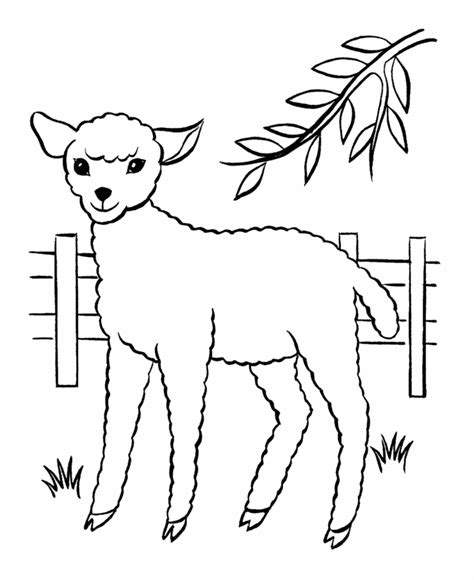 coloring book pages of sheep free printable sheep coloring pages for kids