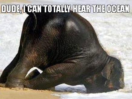 Baby Elephant Meme - happy baby elephant memes