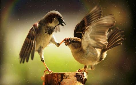imagenes animales grasiosos fondos de pantalla de animales graciosos y divertidos