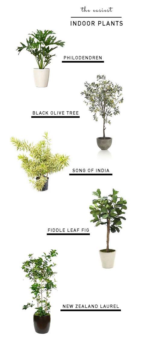 easiest indoor plants best 25 indoor trees ideas on indoor tree