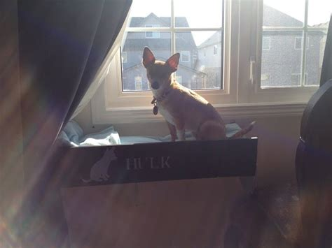 diy pet window seat diy window perch with steps ikea hackers