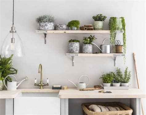 plants  liven   kitchen completehome