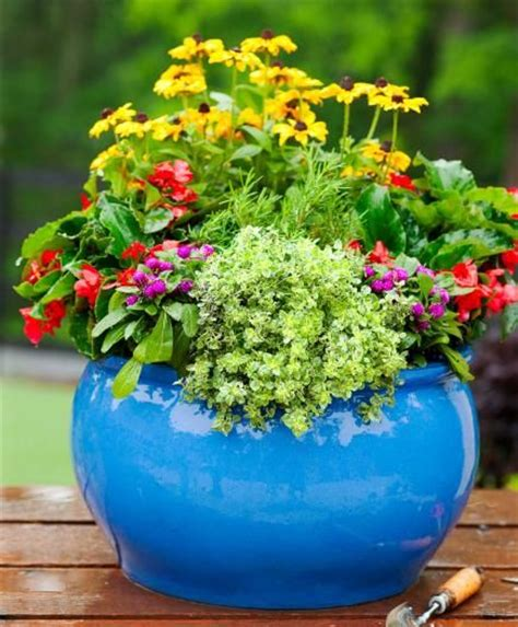 best flowers for small pots 952 best images about container gardening on pinterest