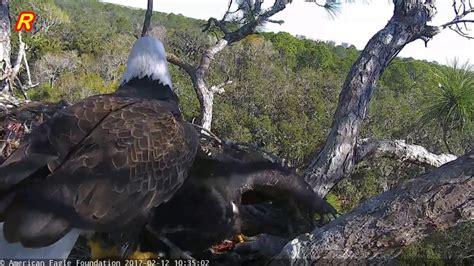 aef nefl eagle nest juliet aborts a landing hope bites