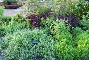 how to grow a herb garden growing an herb garden gardening delights