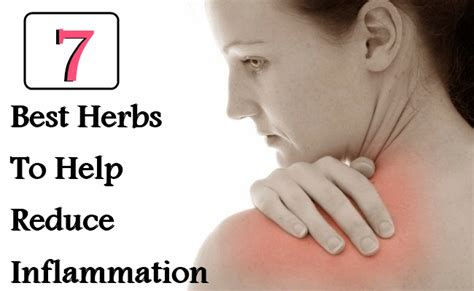 best medicine for inflammation 7 best herbs to help reduce inflammation fast search