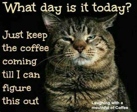 pin  rhonda bradshaw  cats coffee quotes coffee