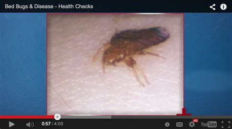 what diseases do bed bugs carry pin by national pest management association on health