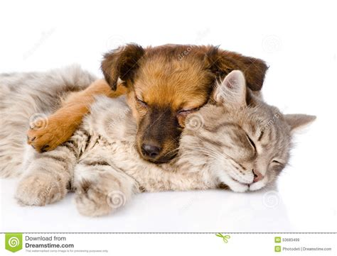 katze zuckt beim schlafen katze und hund die zusammen schlafen getrennt auf wei 223 em