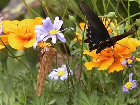 what colors attract butterflies attracting butterflies to the garden hgtv