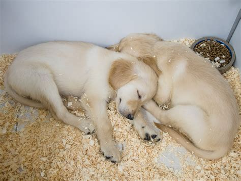 puppies in ct puppies 7 puppies and kittens danbury ct biological science picture directory