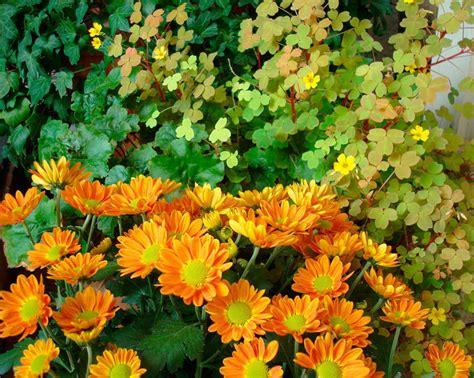 summer flower summer flowering perennials