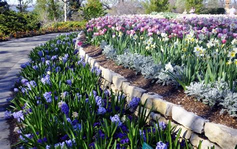 flower beds around house flower beds around house house pinterest