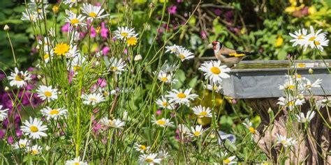 Backyard Birds Matthews Nc Native Plants Are Great Additions To Your Wildlife Habitat