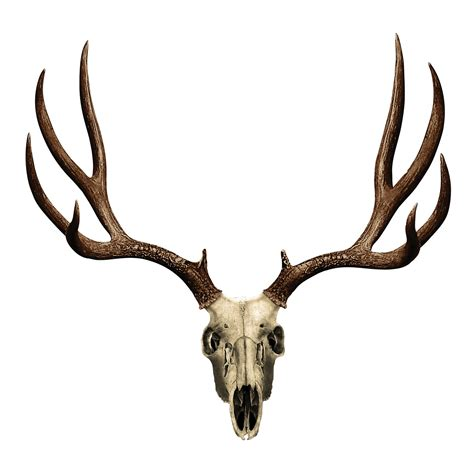 Mule Deer Clipart