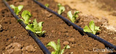 Soaker Hose Irrigation Vegetable Garden Vegetable Garden Planner Garden Planning Apps Growveg