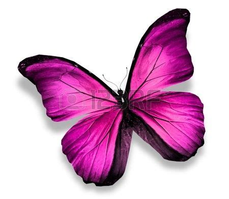 imagenes de mariposas reales mariposas rosadas www pixshark com images galleries