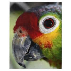 colorful parrot photo puzzle birds emus cassowaries