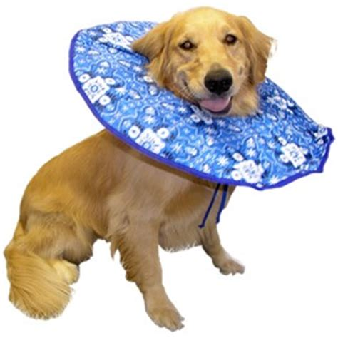 soft e collar for dogs 5 more alternatives to the dreaded cone of shame