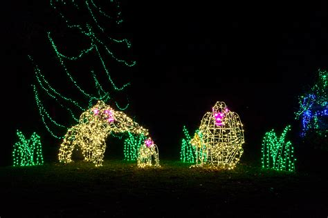 Zoo Lights Plan A Nighttime Family Adventure For The Woodland Park Zoo Lights