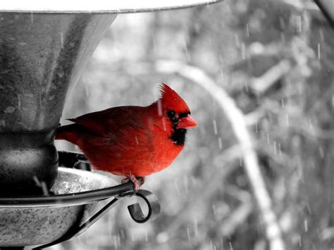 selective color selective coloring just a touch