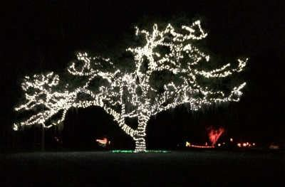 out and about light up the wild at moss park in orlando