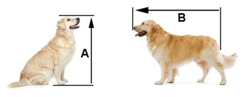 kennel size for golden retriever what size crate do you need which type is best