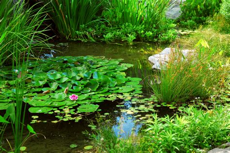 how to clean a pond without draining it pond liner the transition to pond filtering