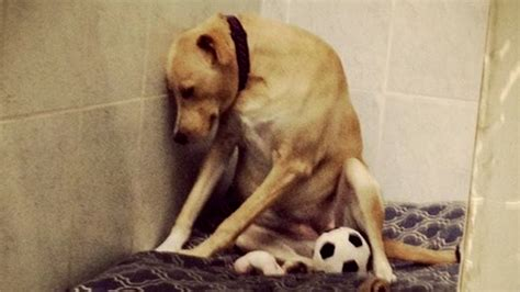 saddest in the world saddest in the world receives more than 3 000 adoption applications today