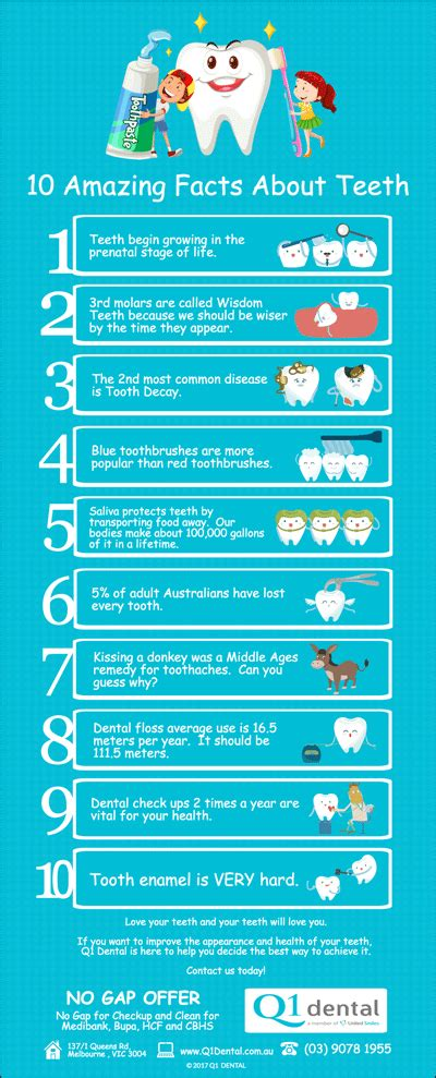random facts about 2017 what makes 2017 a year to remember books 10 amazing facts about teeth q1 dental