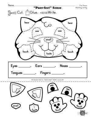 Reproducible Student Worksheet by 5 Senses Labeling Worksheet Student Reproducible