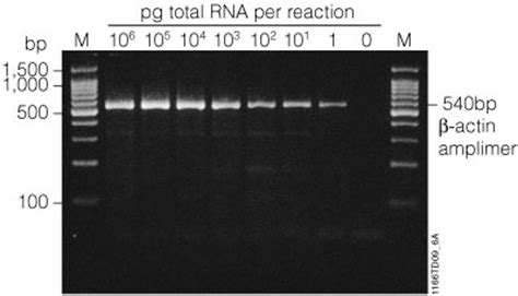 how much template dna for pcr pcr lification