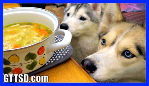 chicken broth for dogs chicken soup for dogs diy how to make chicken soup for dogs to the snow dogs