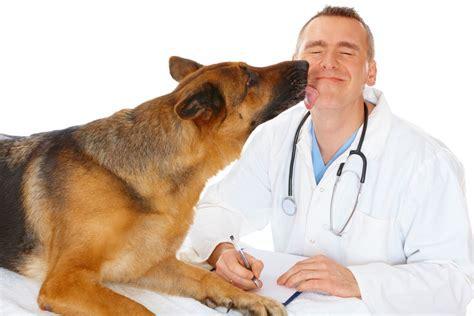 puppy vet veterinarian description