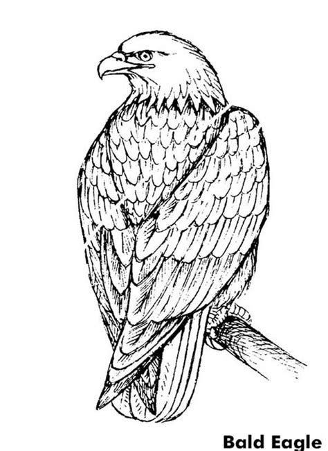 coloring page of an eagle s nest bald eagle coloring page at bald eagle head bald eagle