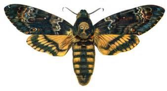 file acherontia atropos nemos jpg wikimedia commons
