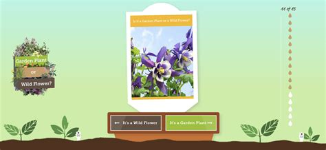 Gardening Quizzes How Well Do You Your Weeds From Your Plants
