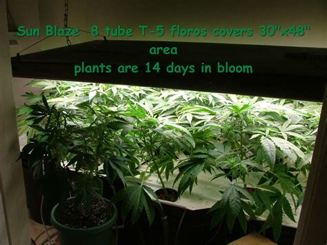 plants that grow in fluorescent light 28 images grow