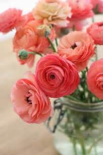 ranunculus flowers all you need to about ranunculus pollennation