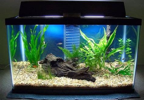 Best Aquarium My Fish Cleaning Tank Betta Cupang decorating your fish tank design your own fish tank best up now