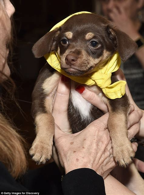 puppy bowl referee puppy bowl to feature hurricane rescue dogs and a slot daily mail
