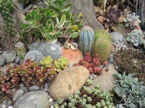 Rock Garden Succulents Succulent Rock Garden Succulents