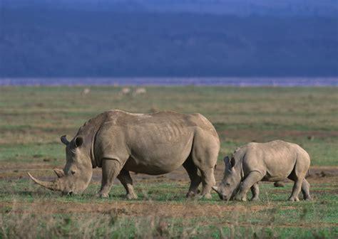 imagenes de animales salvajes de africa nature animales salvajes